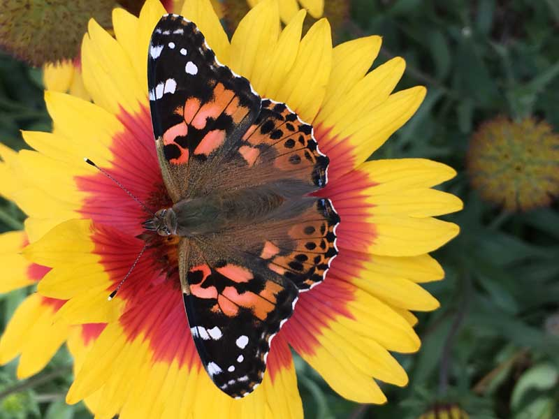 Native Plants to Attract Pollinators @ Green Bay Botanical Garden | Green Bay | Wisconsin | United States