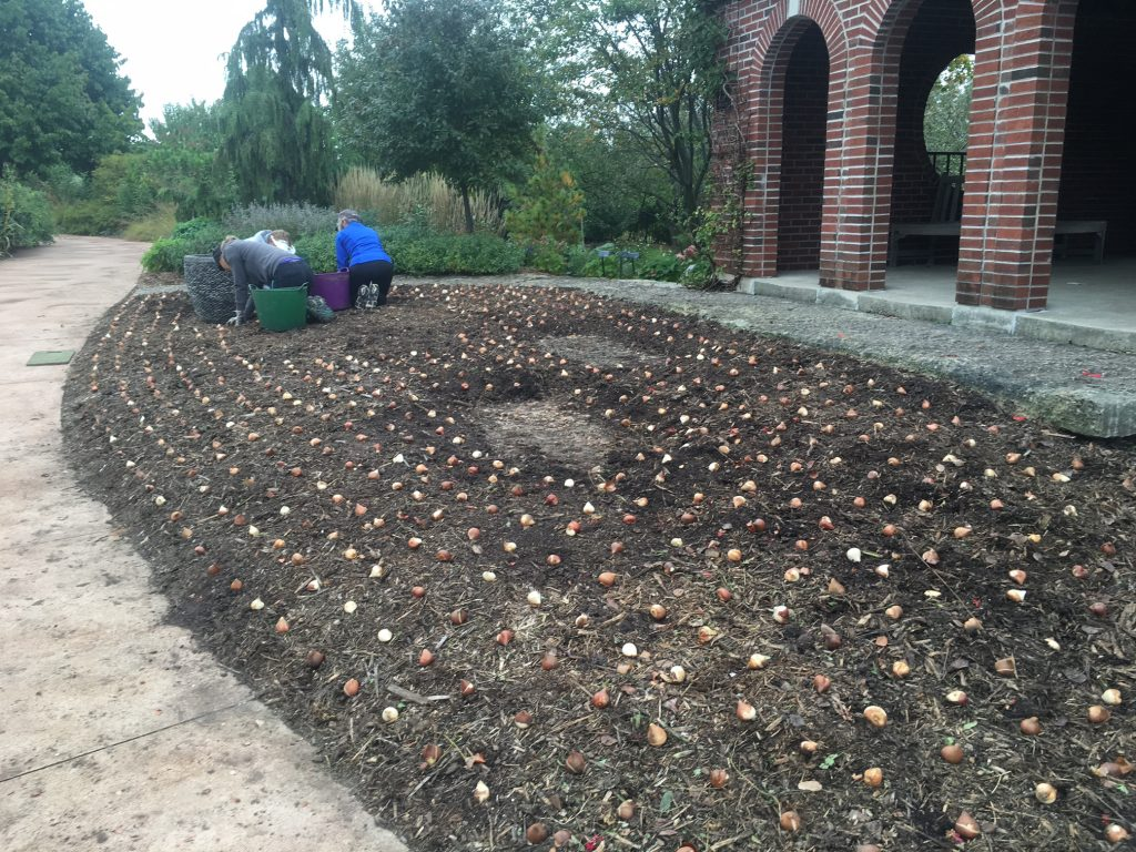 Planting bulbs in soil by Wellhouse