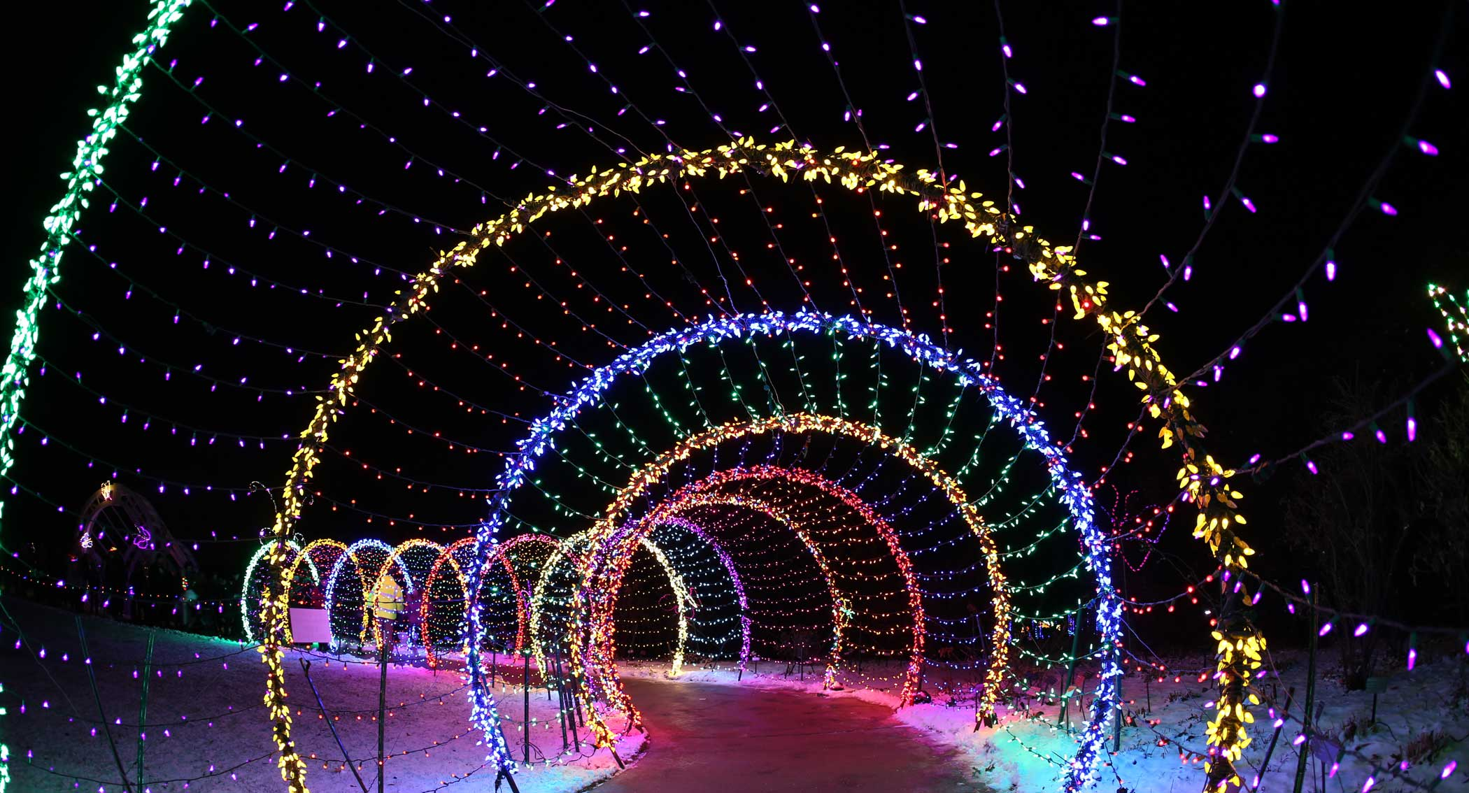 WPS Garden of Lights Caterpillar Light Display PC Kathleen Caylor Photography