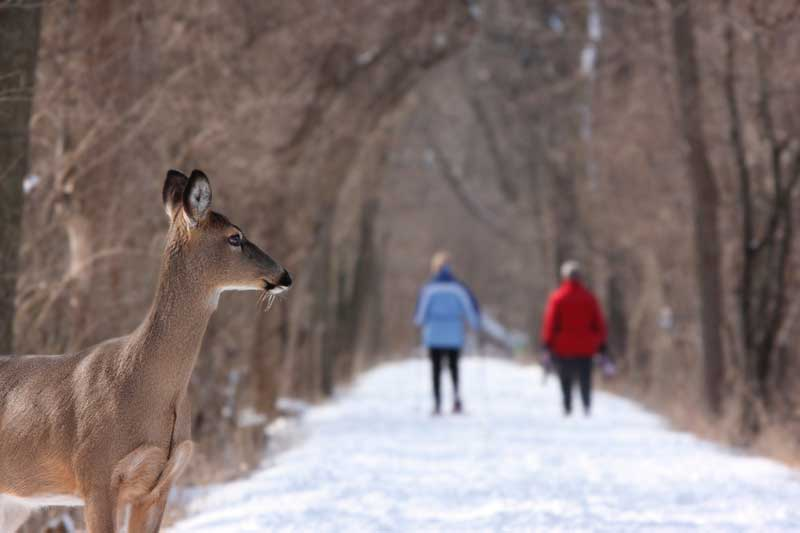 deer on snow path PC: Gary Bendig on Unsplash
