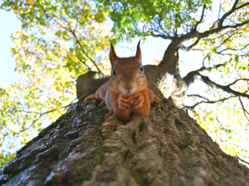 squirrel on tree PC: Kylli Kittus on Unsplash