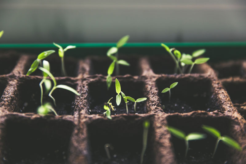 seedlings in containers PC Markus Spiske on Unsplash