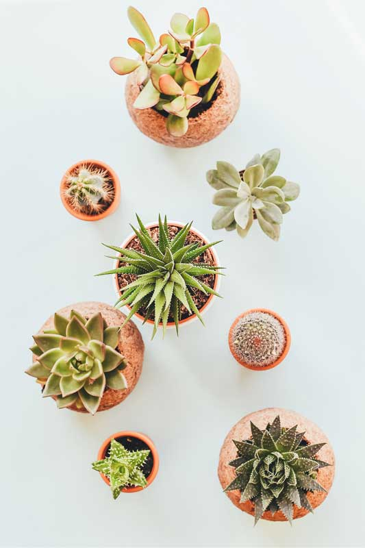 varied succulents in pots