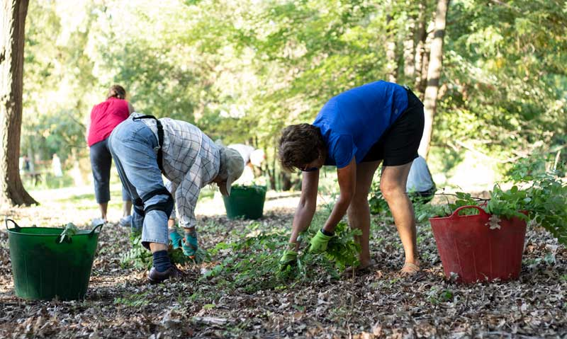 volunteers picking up weeds in garden PC: Alex Verstoppen