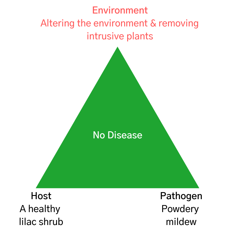 disease triangle concept model - environment
