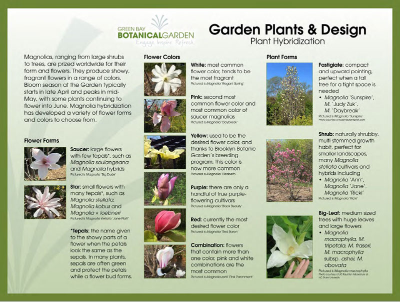 magnolia hybridization sign