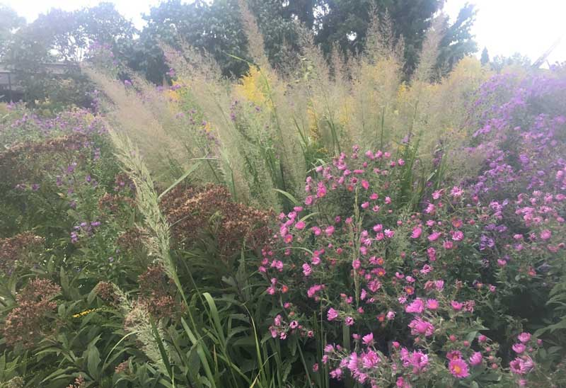 native plants prairie grass