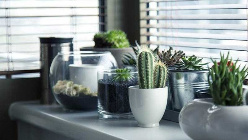 plants on window will