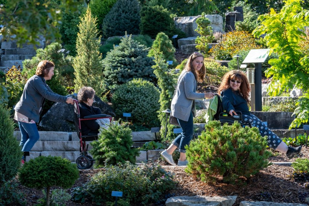 visitors in conifer garden