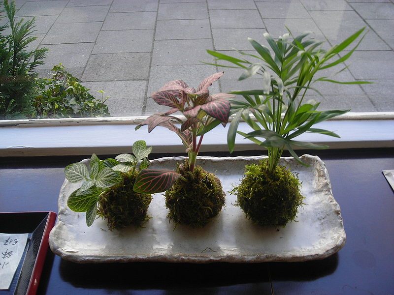Virtual Class: Creating Potless Plants - The Art of Kokedama @ Green Bay Botanical Garden