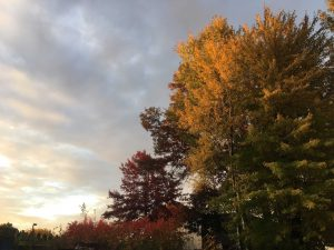 Pop-Up Tour: Fall Colors! @ Green Bay Botanical Garden | Green Bay | Wisconsin | United States