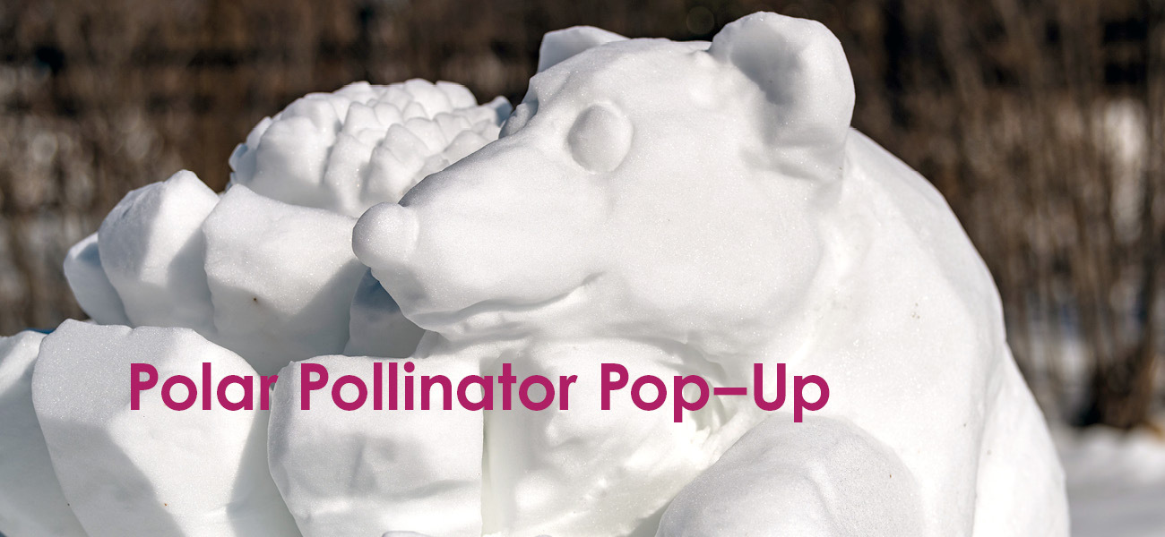 Polar Pollinator Pop-Up